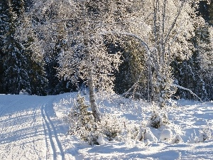 Way, winter, trees, viewes, Snowy, forest