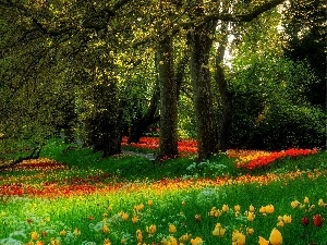 Park, viewes, Tulips, trees