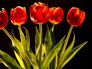tulips, five, red