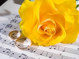 Yellow, rings, Tunes, roses