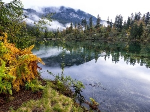 Fog, River, viewes, fern, trees, Mountains