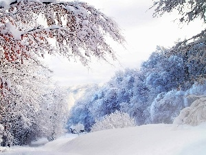 forest, winter, viewes, Home, trees, snow