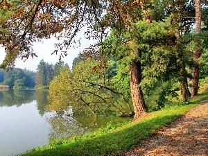 lake, trees, viewes, Way