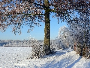 viewes, winter, Way, trees, field