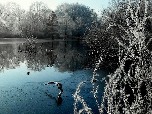 viewes, winter, lake, trees, Park