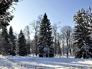 winter, trees, viewes, snow