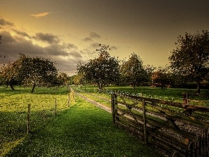 viewes, orchard, Way, fence, fruit, trees