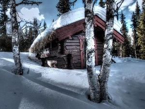 forest, drifts, winter, cottage