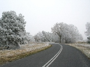 Way, viewes, winter, trees