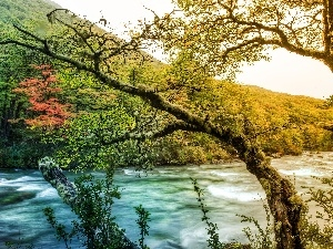 autumn, Mountains, woods, River